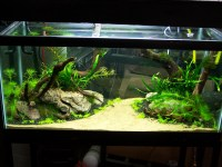 1000+ images about Aquariums! on Pinterest | Aquarium ...