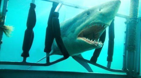 Shark Night - Das Grauen lauert in der Tiefe (©Universum Film)