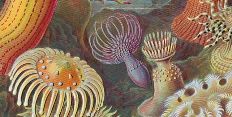 """The Art and Science of Ernst Haeckel"" (TASCHEN)"