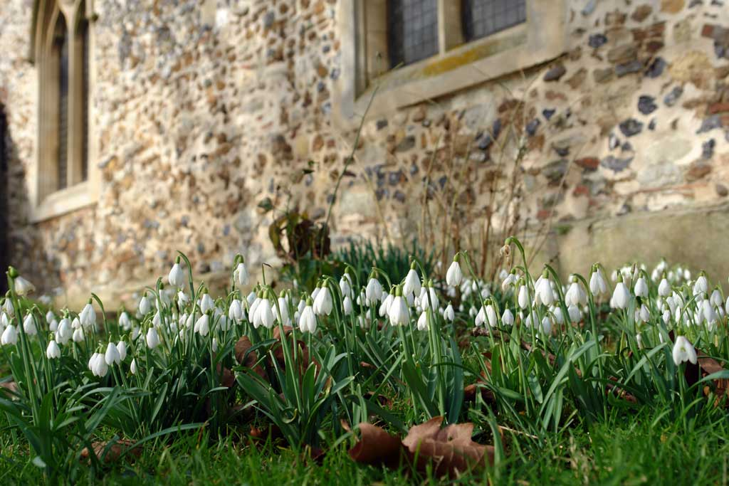 snowdrops-st-mays-church