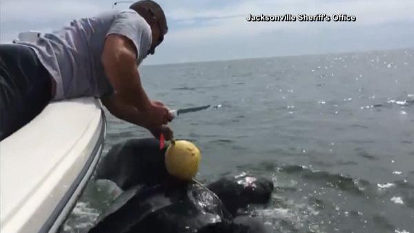 sea-turtle-rescue_112535