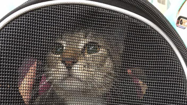 r-cat-1-web_bkg_tex_layers_271935