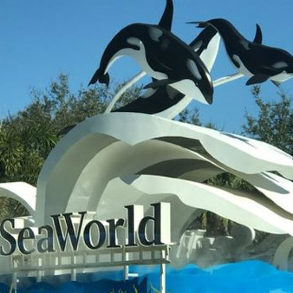 r-seaworld-1-web_bkg_tex_l_299831