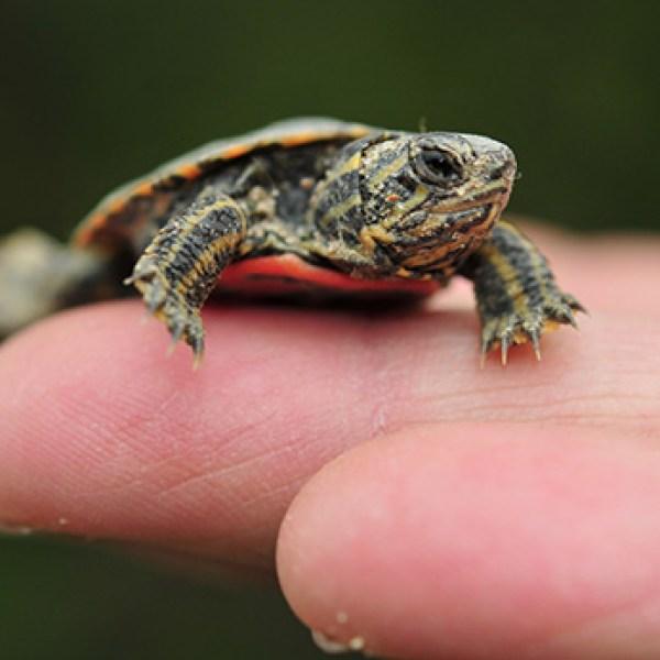 turtle_439893