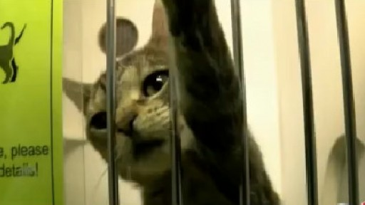 Pasco County Animal Services waives adoption fees for cats and dogs