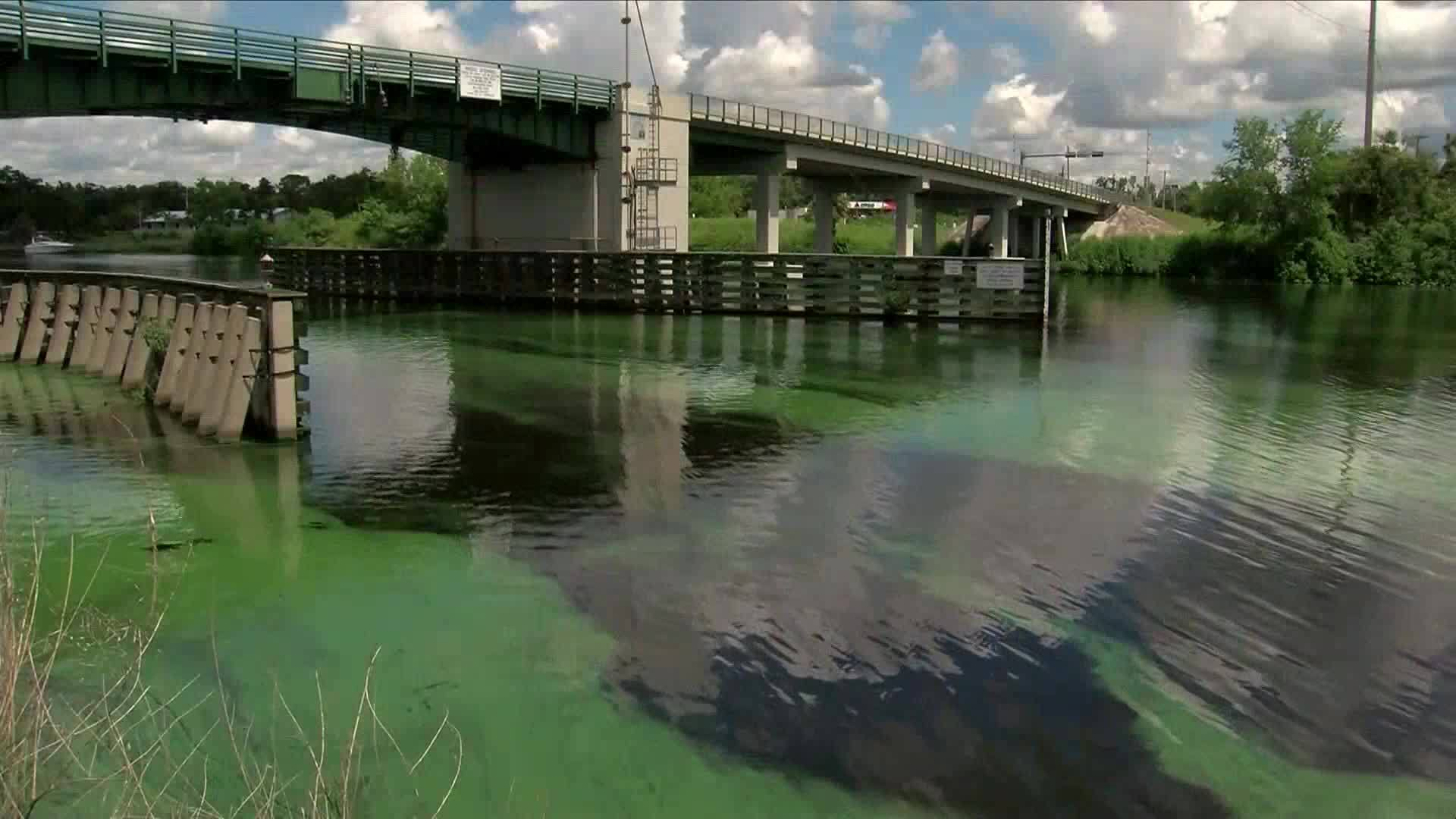 Green algae floating down Caloosahatchee River, concerning residents