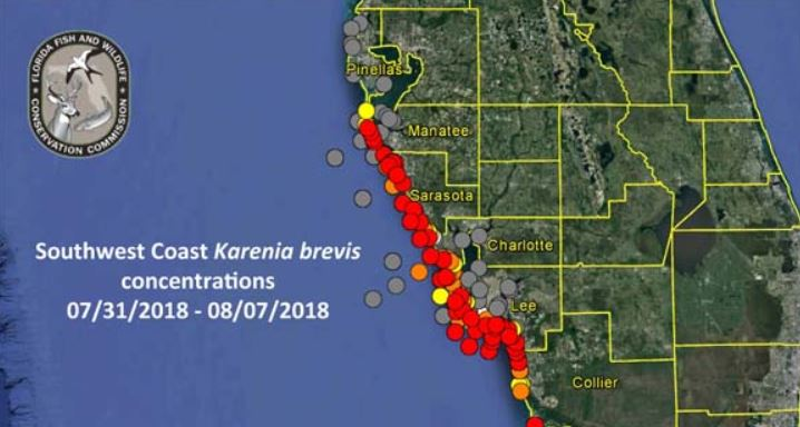 Map Of Southwest Florida Coast.How To Check For Red Tide Before Going To The Beach