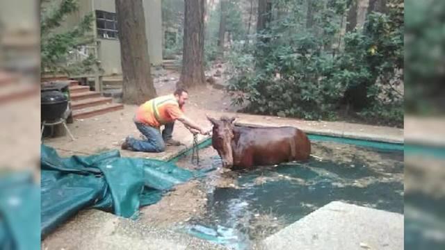 Horse_Pool_7_61956829_ver1.0_640_360_1542079726981-846653543.jpg