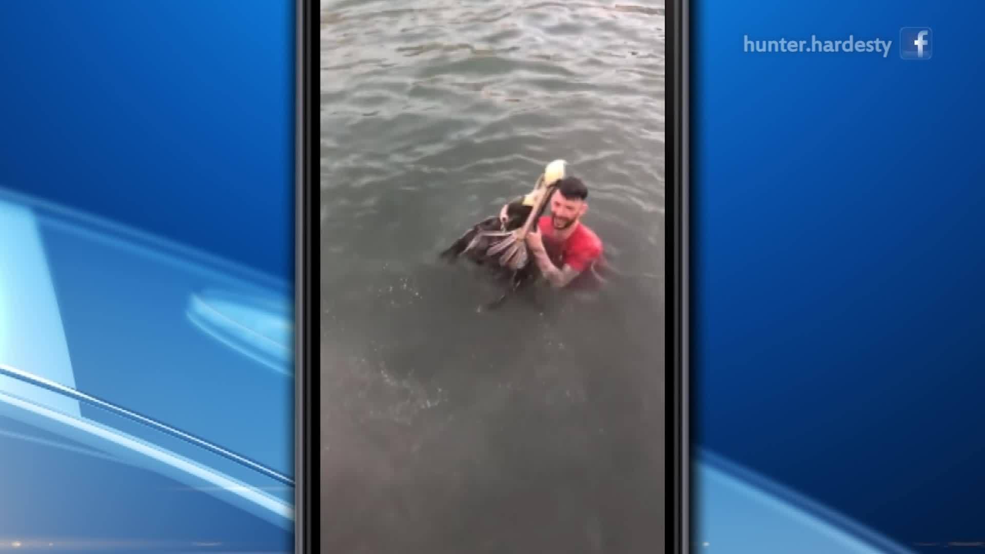 FWC charges man seen jumping on pelican in viral video