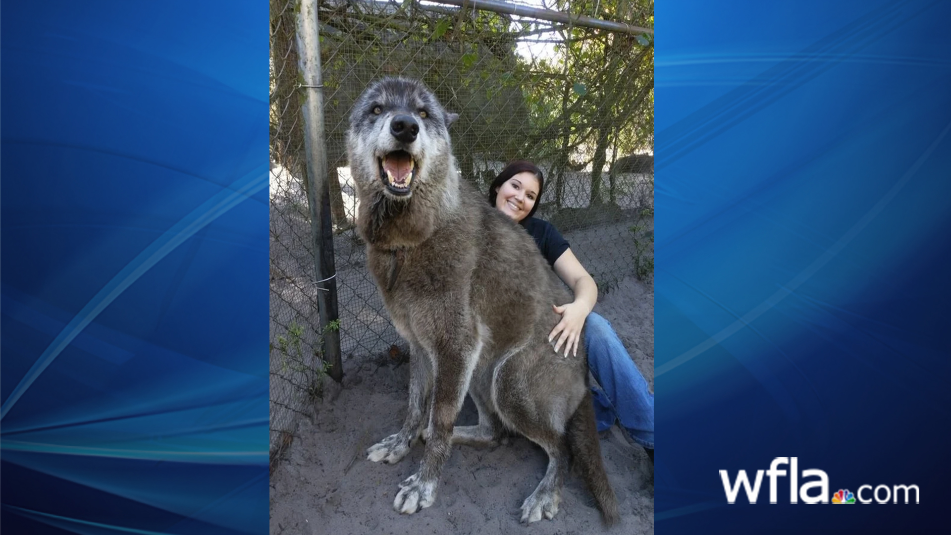 Yuki the Wolf.jpg