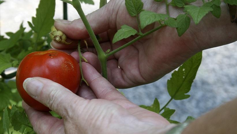 Gardening Gauging Ripeness_1556787269288