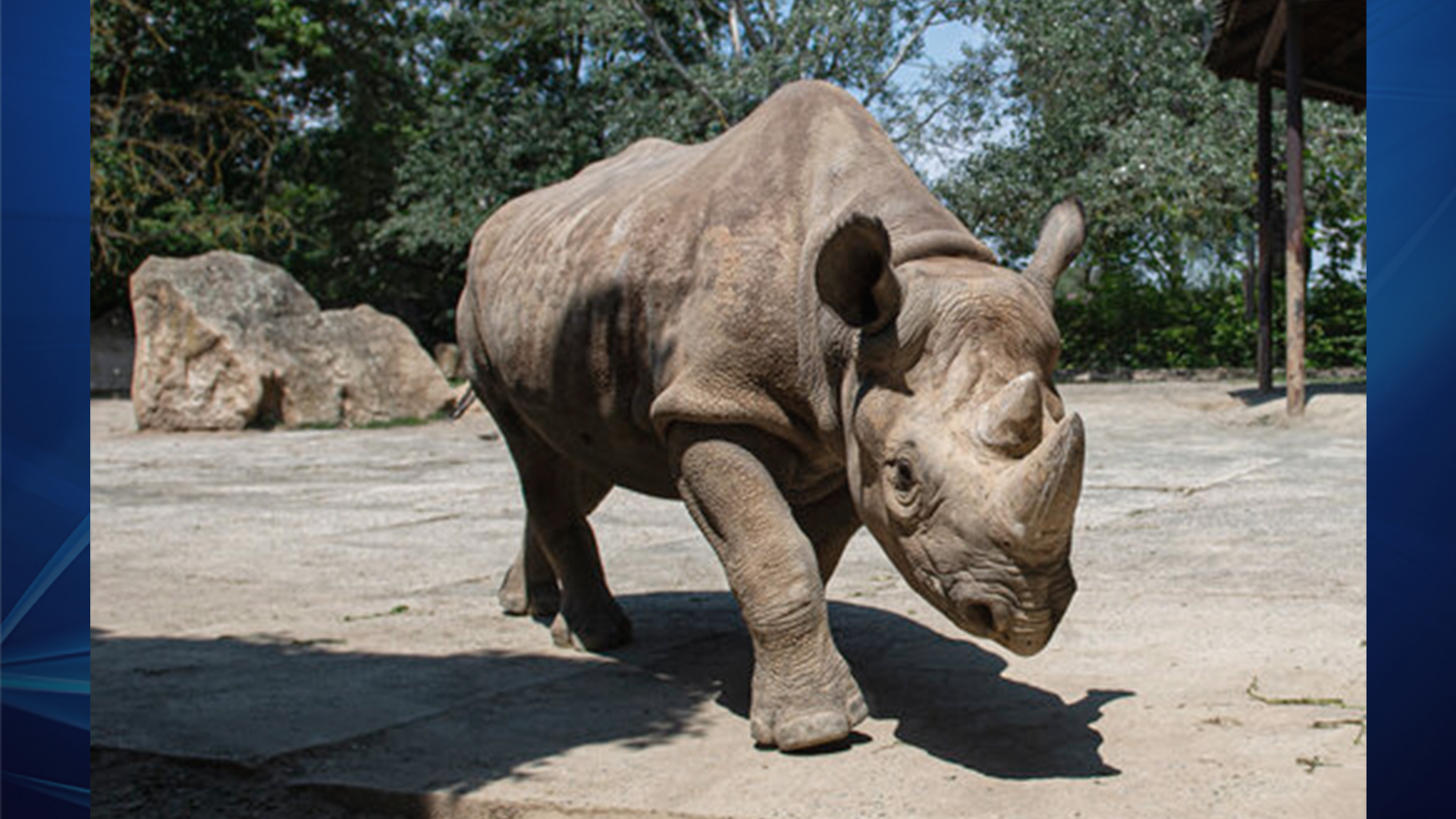 Rhino_1561482184520.jpg