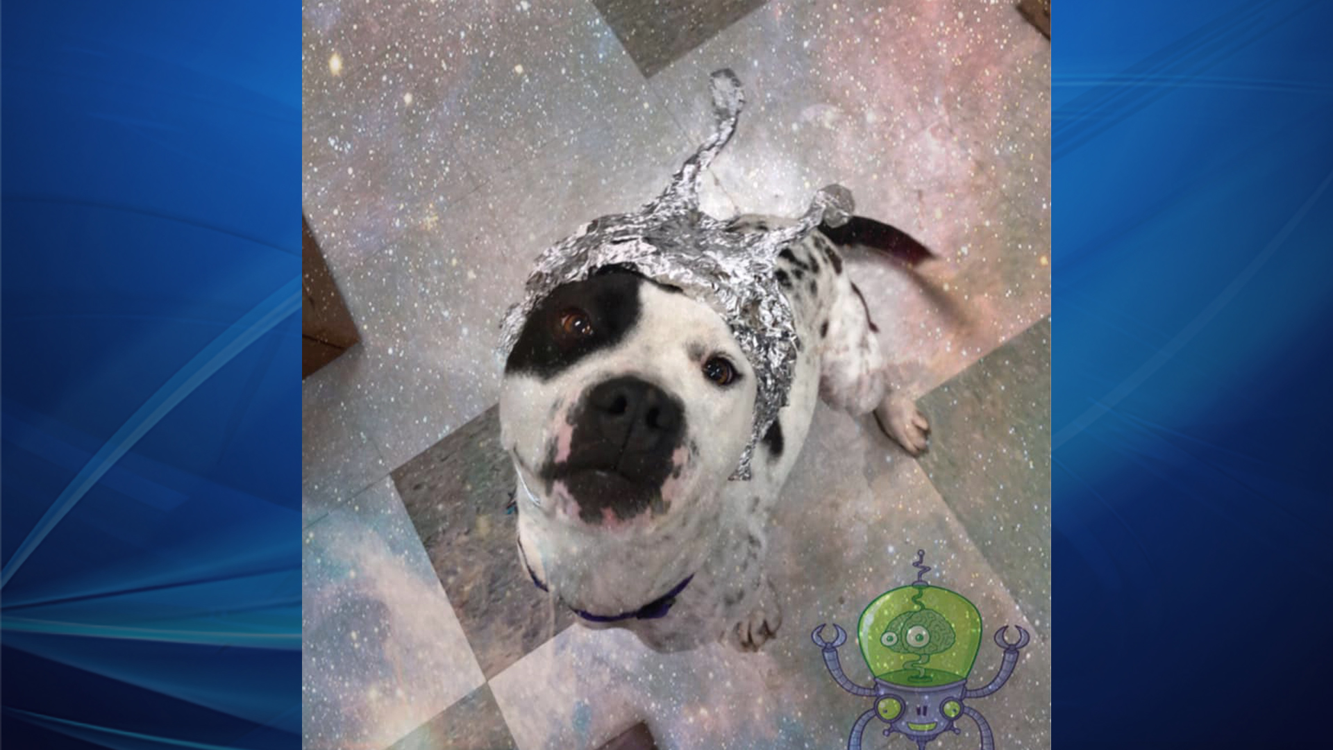 Shelter From Storm With Devices >> Oklahoma Animal Shelter Encouraging Area 51 Fans To Storm Our