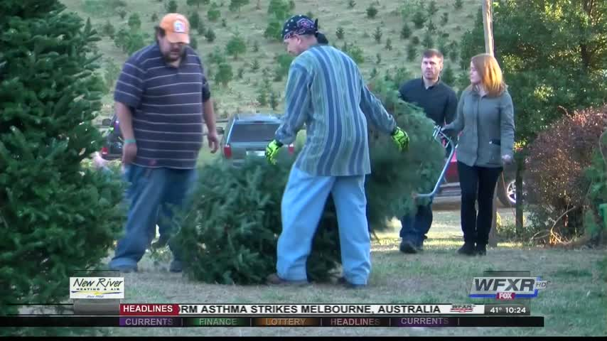 Ag Life- Christmas tree farms open for season_84766093-159532