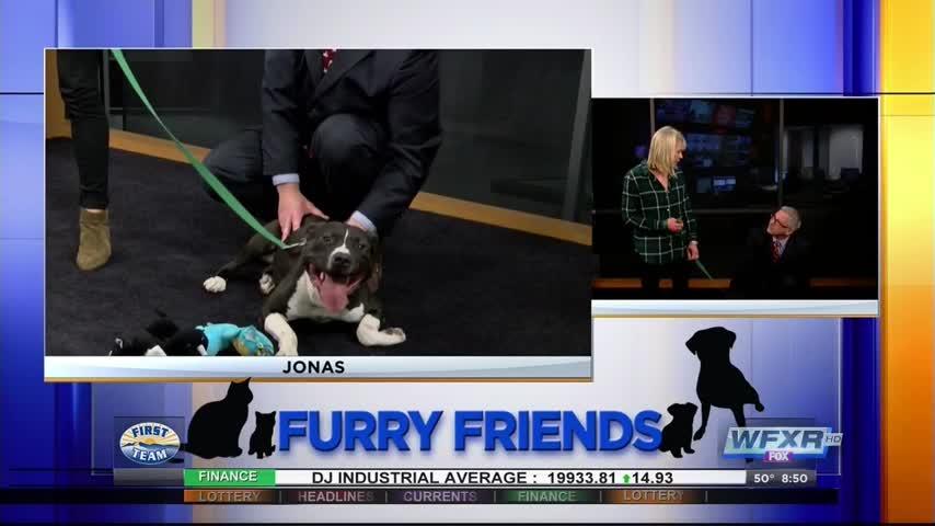 Furry Friends- Meet the playful Jonas_73743121