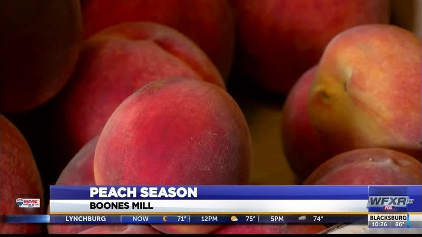 Peach Crop_81147028