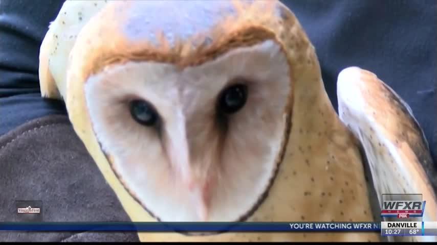 Ag Life- Barn owls on the decline_86568225
