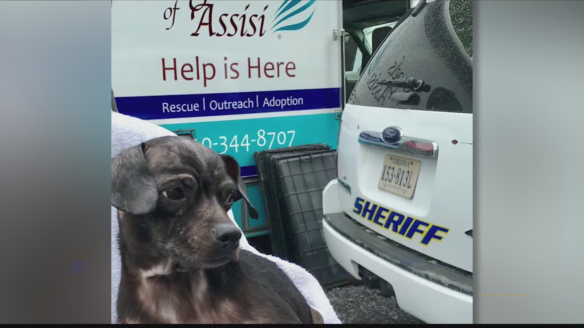 Angels_of_Assisi_rescues_60_dogs_from_ho_0_20190513040445