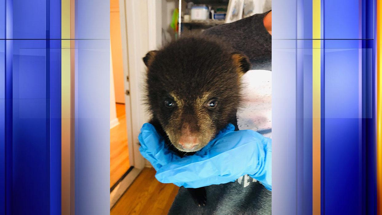 (Photo: Courtesy Southwest Virginia Wildlife Center of Roanoke)