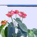 Self-Adhesive Smart PDLC Film