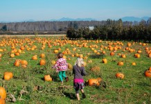 pumpkin patch bellingham