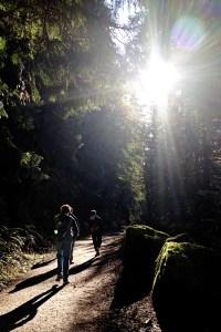 north-lake-whatcom-hertz-trail5