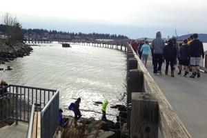 south-bay-trail-boardwalk2