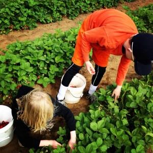 u-pick farms bellingham
