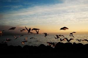 bellingham sunset