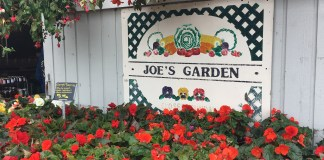 Fresh Summer Produce at Joe's Gardens