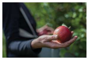 Learn to Grow Organic Fruit at Home @ WCLS Deming Library   Everson   Washington   United States
