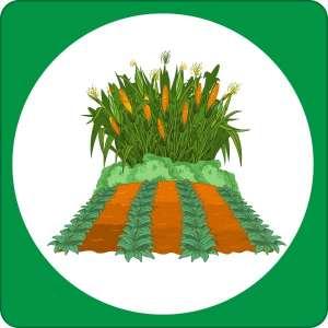 Starting Your Vegetable Garden @ WCLS Blaine Library | Blaine | Washington | United States