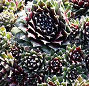 Make It and Take It Hardy Sedum Living Wall Garden @ The Garden Spot Nursery | Bellingham | Washington | United States