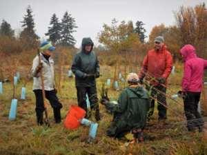 NSEA Community Work Party at Butler Creek @ Butler Creek | Ferndale | Washington | United States