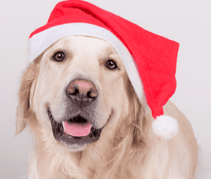 Pet Photos with Santa and Gift Fair @ The NOAH Center | Stanwood | Washington | United States