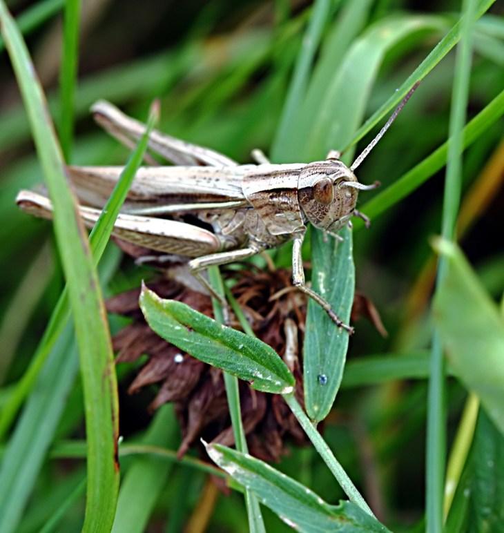 Rainforest Animals That Eat Grasshoppers