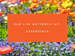 Our Live Butterfly Kit Experience