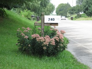 tall sedum mailbox plant