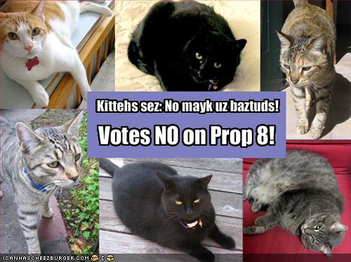 Cats say VOTE NO on Prop 8