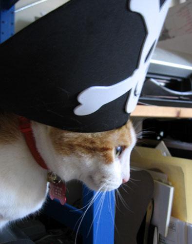 Ship ahoy! says Damian