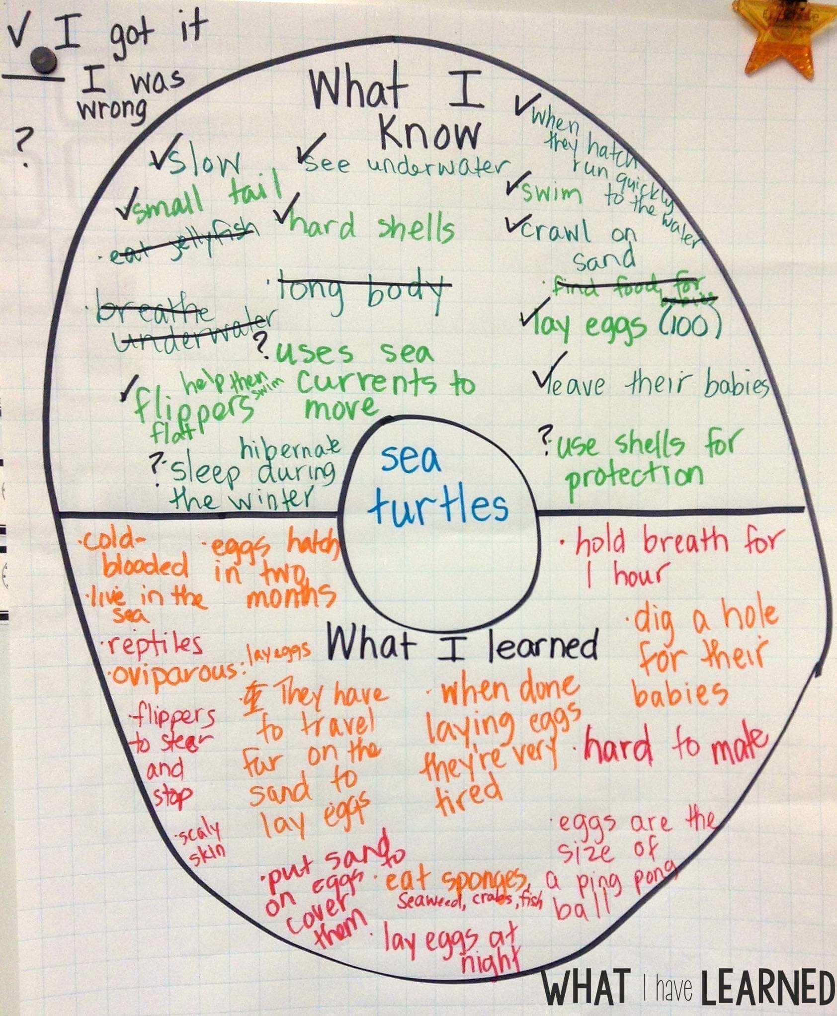 medium resolution of Set the Routine - Informational Writing: Week 1 - Sea Turtles