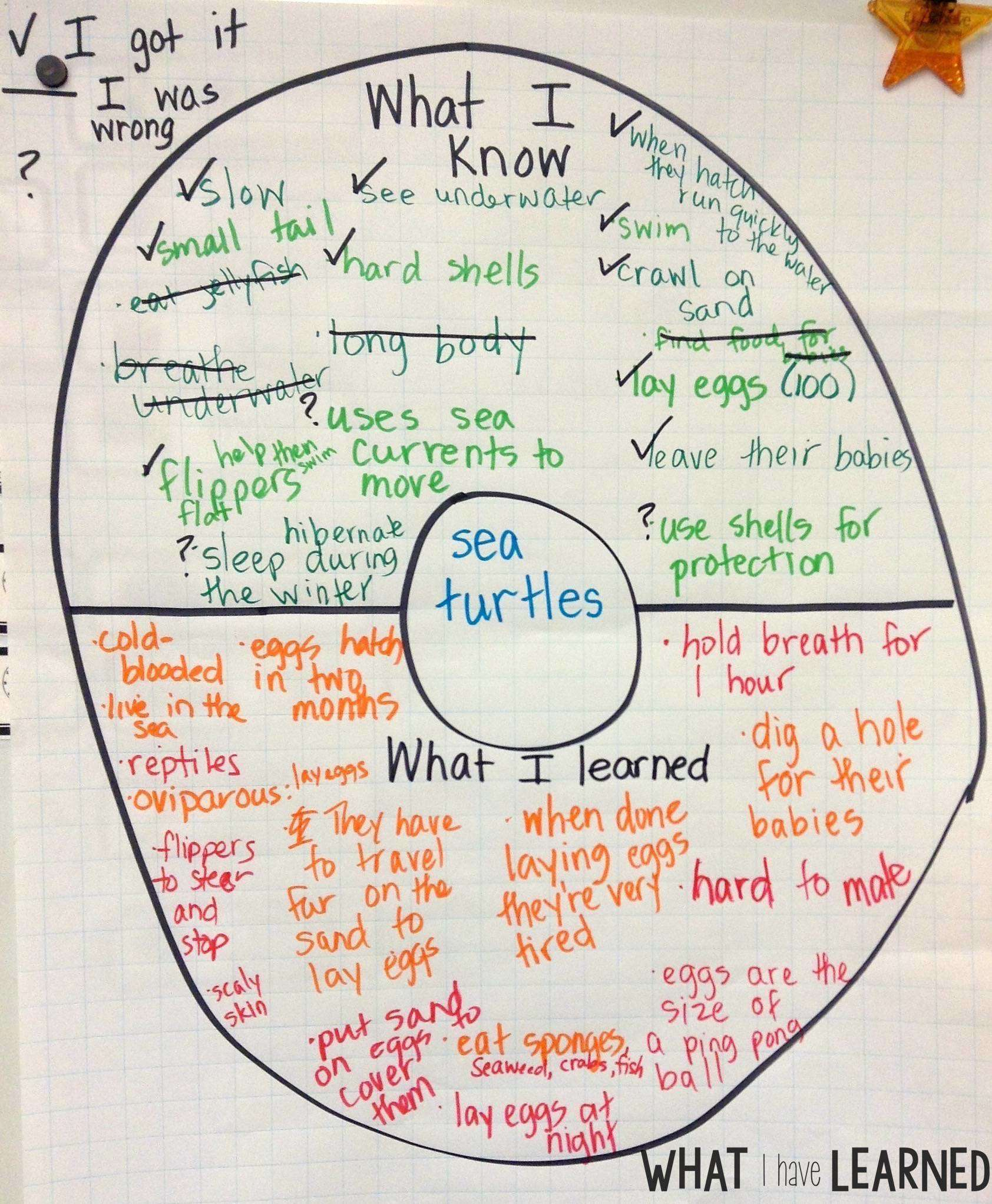 small resolution of Set the Routine - Informational Writing: Week 1 - Sea Turtles