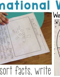 also set the routine informational writing week sea turtles rh whatihavelearnedteaching