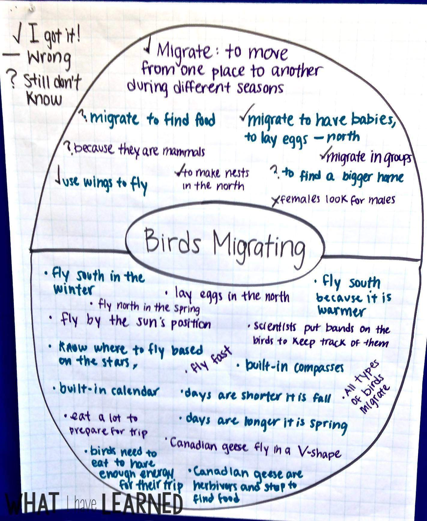 Organize Facts - Informational Writing: Week 5 - Bird Migration [ 1737 x 1422 Pixel ]