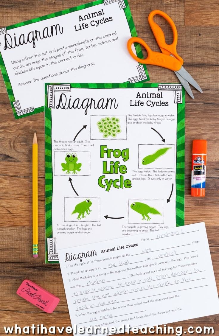 hight resolution of science station focusing on the life cycle of plants and animals included are cut and