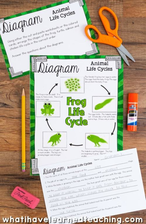 small resolution of science station focusing on the life cycle of plants and animals included are cut and