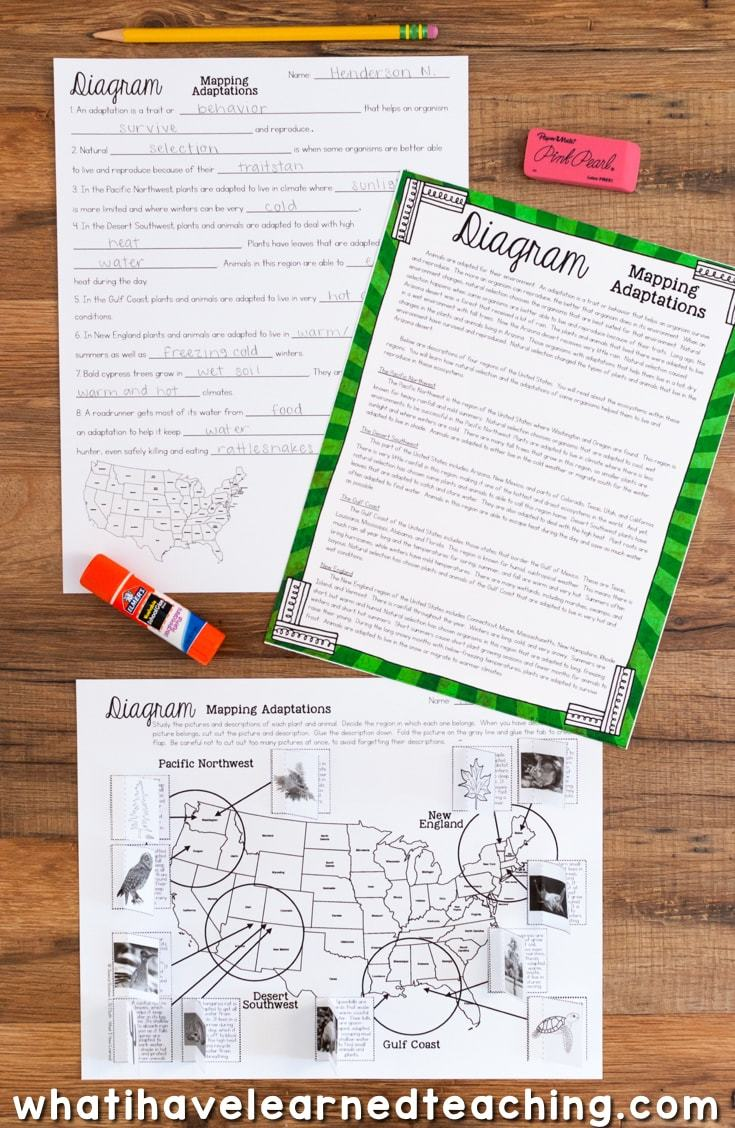 hight resolution of Third Grade Science Stations BUNDLE
