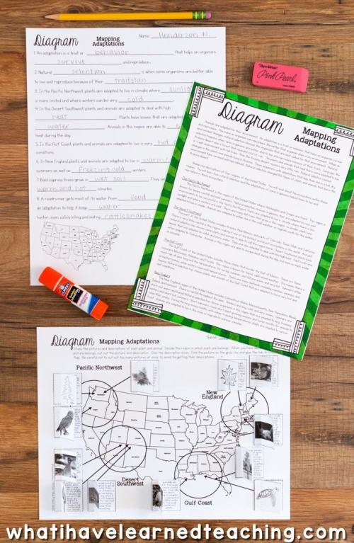 small resolution of Third Grade Science Stations BUNDLE