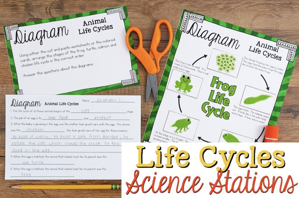 Writing Teaching Diagrams Life Cycles Of Plants And Animals Science Stations For