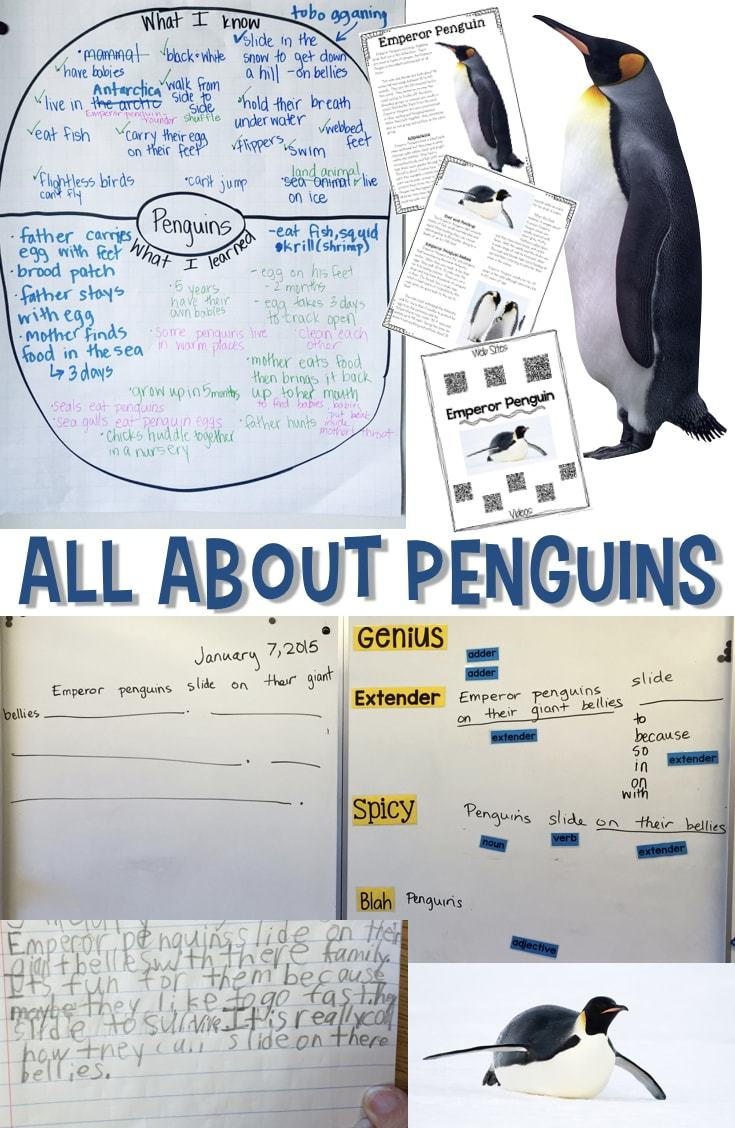 All About Penguins - Informational Reading and Writing for Winter [ 1128 x 735 Pixel ]